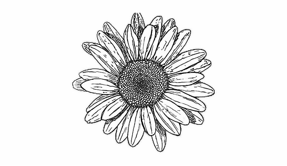 Tumblr Drawing Hipstergirl Myedit Flower Drawing Tumblr Png.