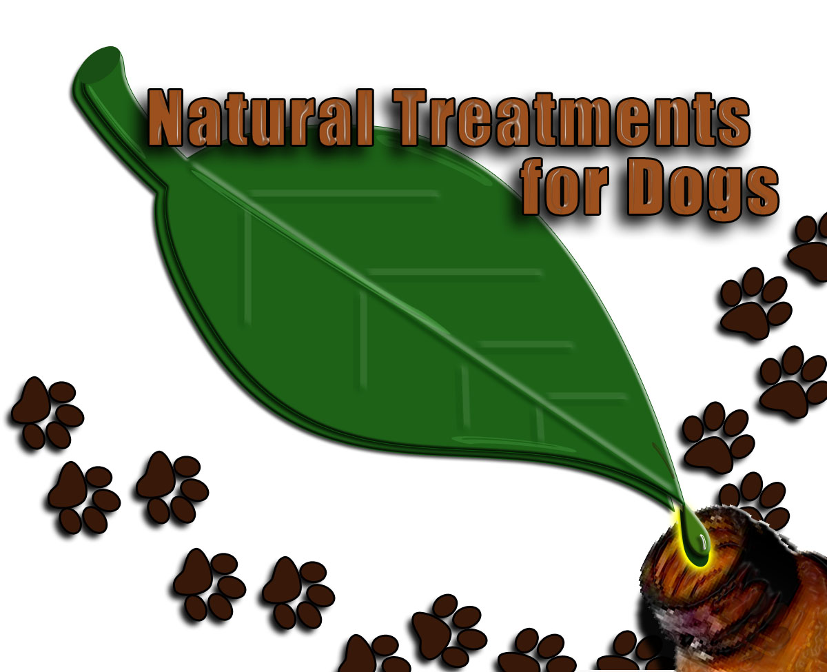 How to Treat Your Dog's Upset Stomach Naturally.
