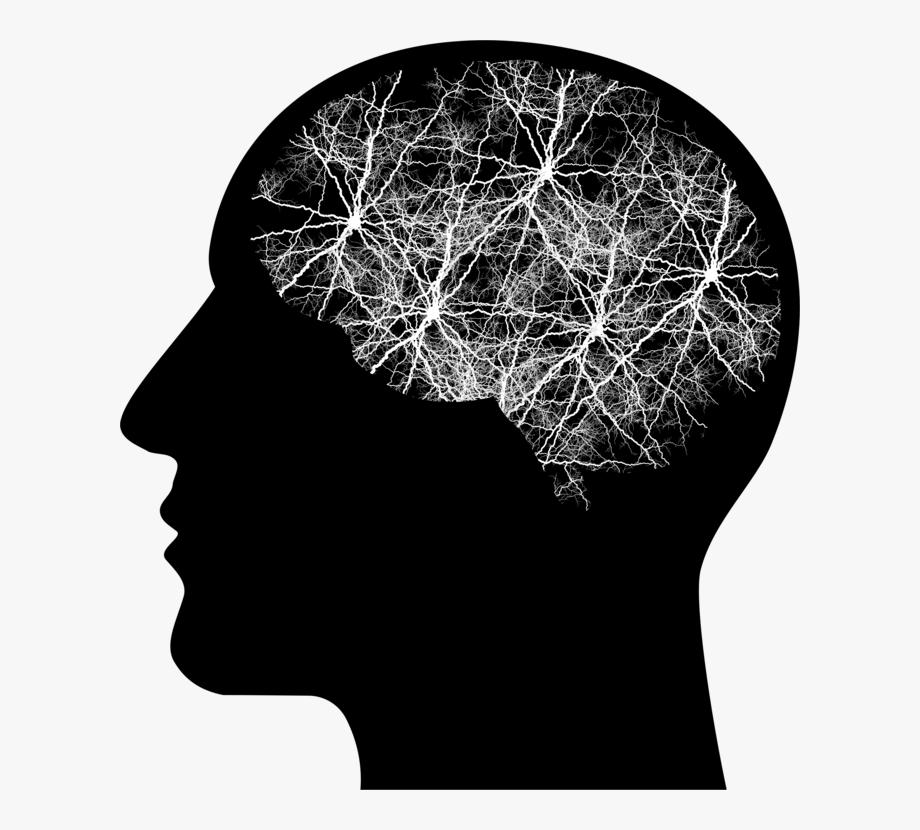 Human Brain Human Head Brain Tumor.