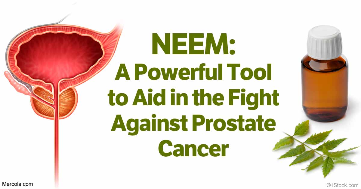 Neem Plant Against Prostate Cancer: See Why Every Man Should.