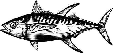 Yellowfin Tuna Clip Art.