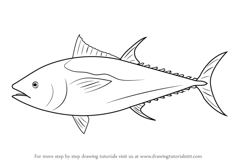 Learn How to Draw an Atlantic Bluefin Tuna (Fishes) Step by.