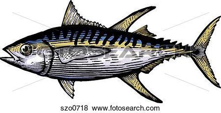 Tuna Illustrations and Clip Art. 441 tuna royalty free.
