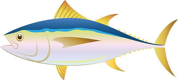 Tuna fish clipart 2 » Clipart Portal.