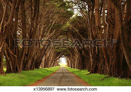 Picture of Tunnel of trees over driveway x13956897.