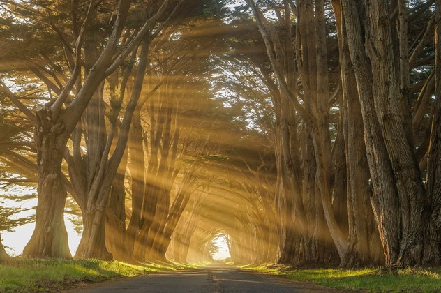 Photograph the Cypress Tree Tunnel in Point Reyes, San Francisco.