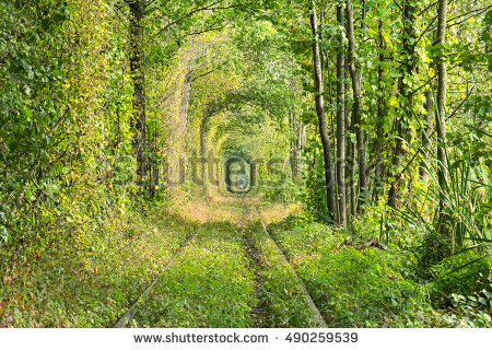 Wonder Nature Real Tunnel Love Green Stock Photo 374115955.
