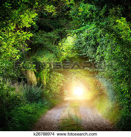 Stock Photo of Tunnel of trees leading to light k26788974.