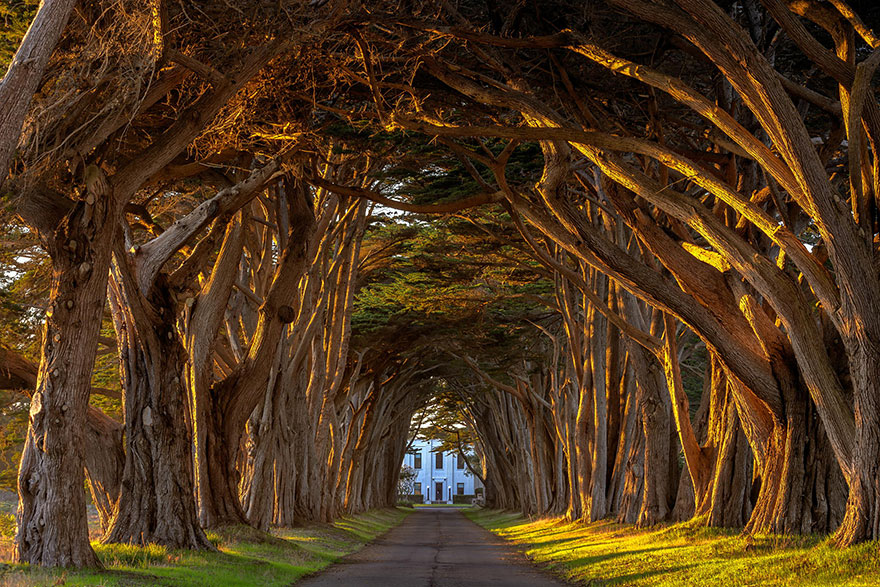 1000+ images about Tree Tunnels and Tree Houses on Pinterest.