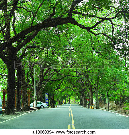 Stock Photo of Green Tunnel, Plants, Tree, Plant, Roads, Natural.