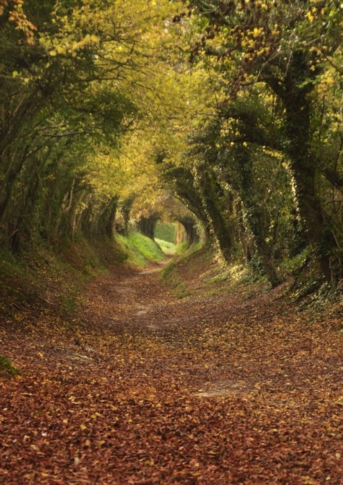 1000+ images about All things leading through a tunnel of trees on.