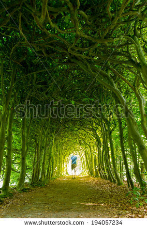 Intertwined Trees Stock Photos, Royalty.