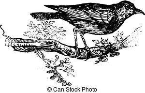 Turdidae Illustrations and Clip Art. 20 Turdidae royalty free.