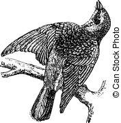 Turdidae Clipart Vector and Illustration. 10 Turdidae clip art.