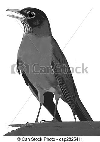 Clipart of American Robin.