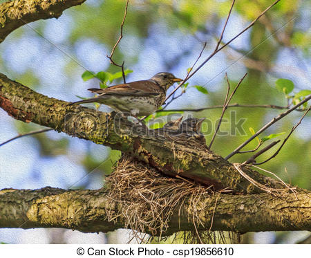 Clipart of Adult bird of turdus pilaris species feeding its.