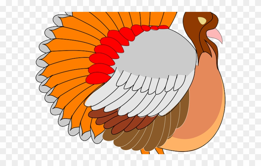 Turkey Bird Clipart Cornucopia.