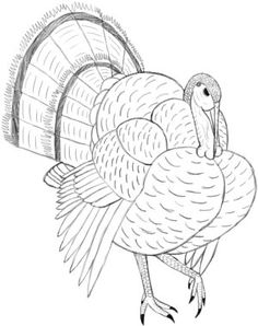 56 Best Turkey drawing images in 2019.