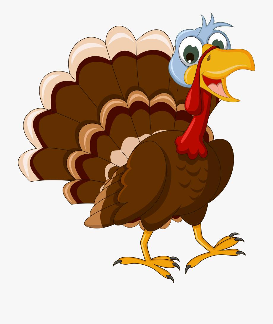 Turkey Clip Art Turkey Clipart Fans Png.