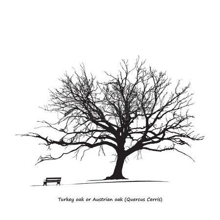 379 Turkey Oak Cliparts, Stock Vector And Royalty Free Turkey Oak.