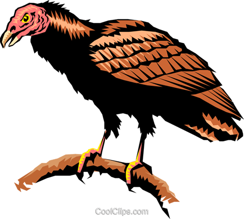 Turkey vulture Royalty Free Vector Clip Art illustration.