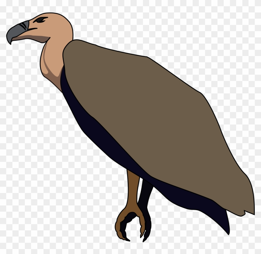 Turkey Vulture Beaky Buzzard Bird Of Prey.
