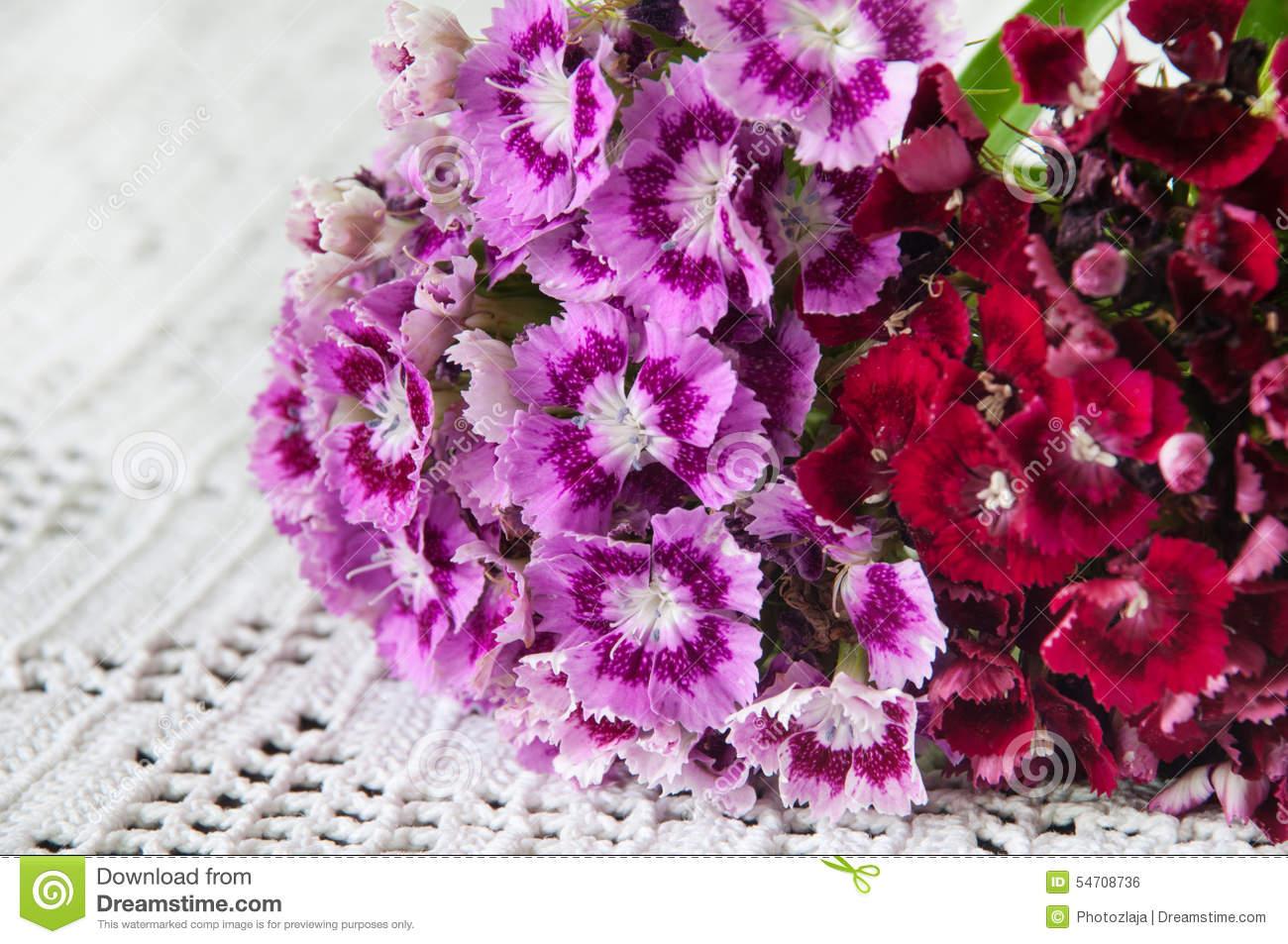 VIOLET RED TURKISH CARNATION FLOWER BEAUTIFUL Stock Photo.