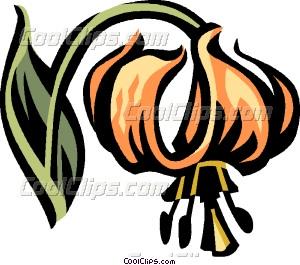 Turk's cap lily Vector Clip art.