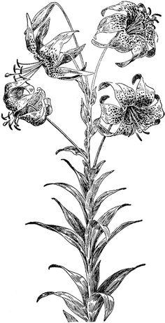 Yellow Flower, the Turk's Cap.