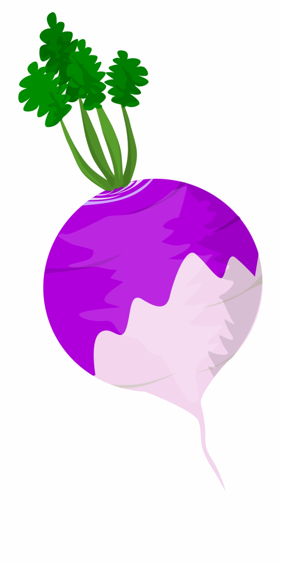Vegetables Clipart Turnip.