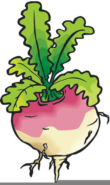 Enormous Turnip Clipart.