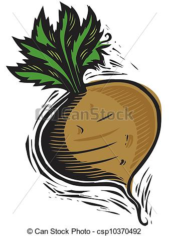 Turnip Illustrations and Clip Art. 688 Turnip royalty free.