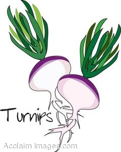 Clip Art of A Couple of Turnips With Greens.