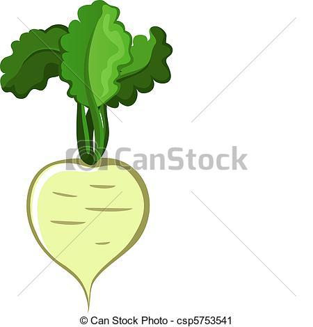 Turnip Illustrations and Clip Art. 688 Turnip royalty free.