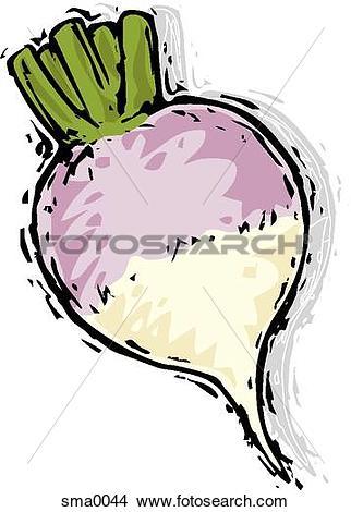 Drawings of turnip sma0044.
