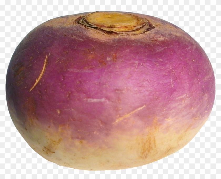 Turnip Png Image.
