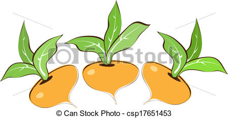 Clipart Vector of Turnips on a white background. Vector.