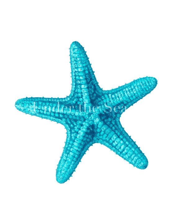 Free Blue Starfish Clipart Best Animal Clip Art ⋆ ClipartView.com.