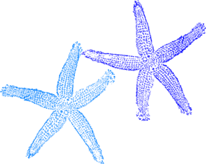 Free Clip art of Blue Starfish Clipart #4258 Best Turquoise.