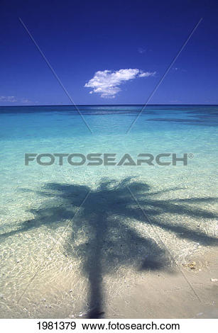 Stock Photograph of Palm Tree Shadow Cast Onto Turquoise Water Of.