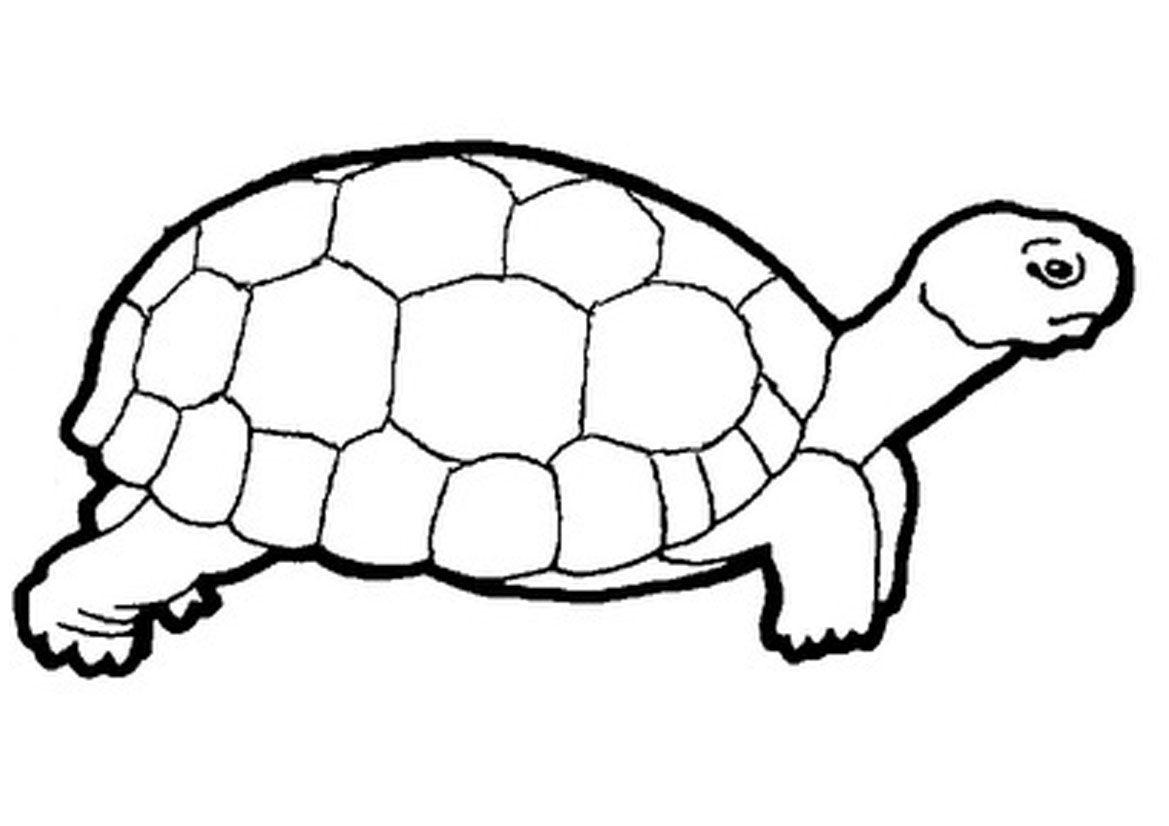 Turtle Clip Art Black And White.