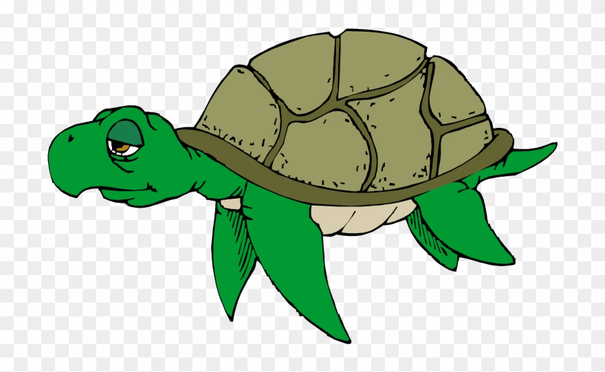 Cartoon Turtle Clipart Free Clip Art Image Image.