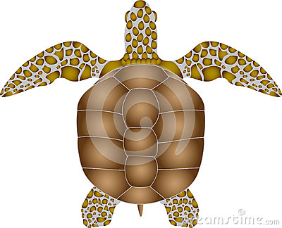 Top View Of Painted Turtle Stock Photo.