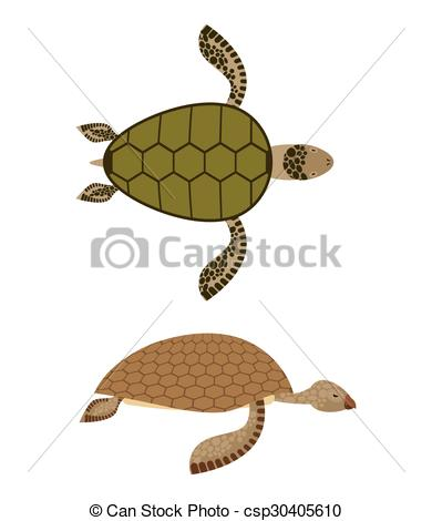 Vector Clip Art of set Water turtle. Side view and top view. Deep.