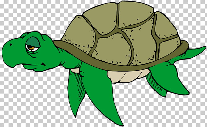 Green sea turtle Free content , Sea Turtle s PNG clipart.