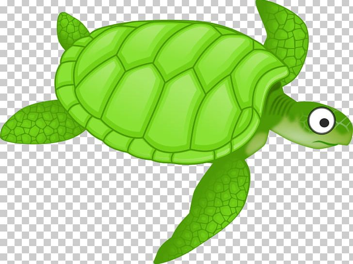 Green Sea Turtle PNG, Clipart, Animal, Caretta, Computer.