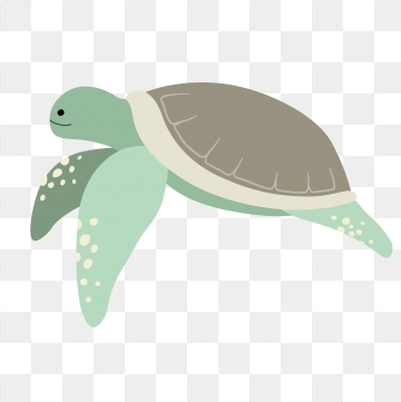 Sea Turtle PNG Images.