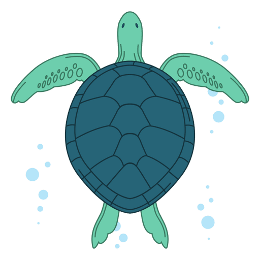 Sea turtle illustration.
