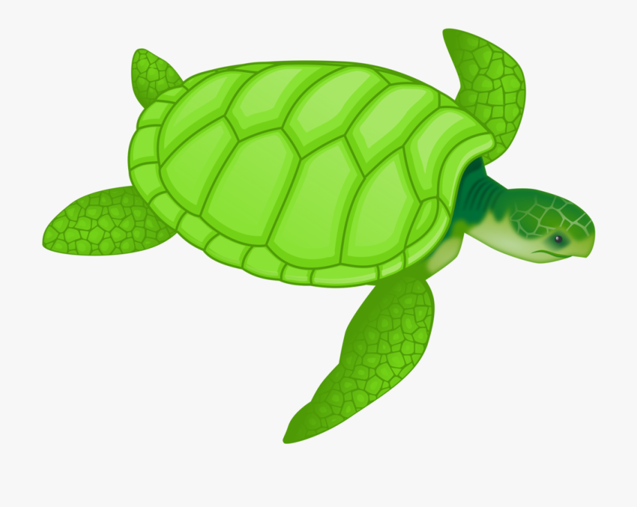 Ocean Animal Clipart.
