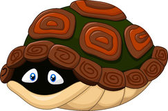 Brown shell turtle clipart.